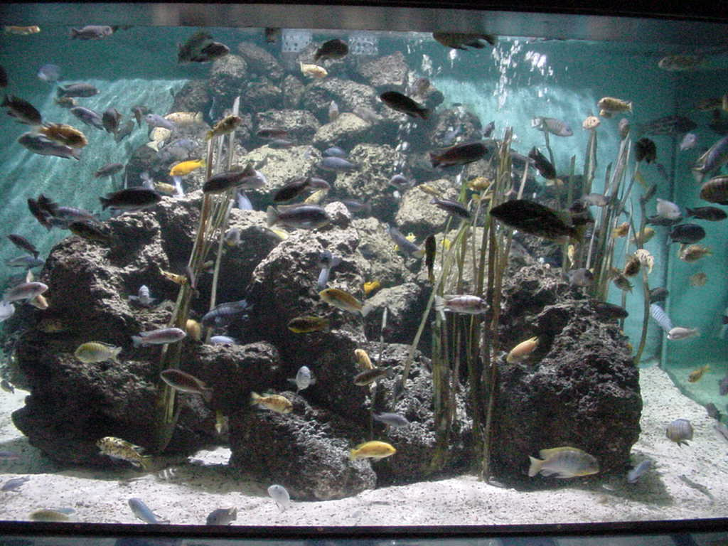 Services offered by New Jersey Aquarium Services